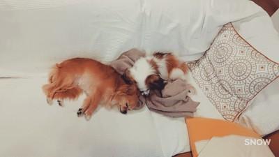 犬が二匹で寝ている