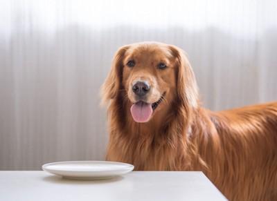 皿の前に立つ犬