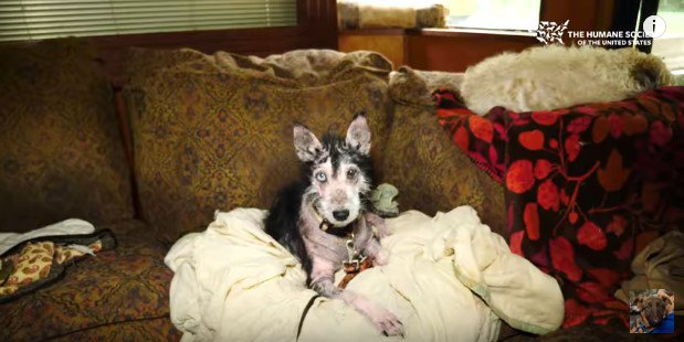 船室のソファの上の犬