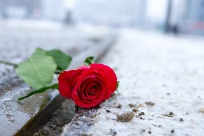 道に落ちているバラの花