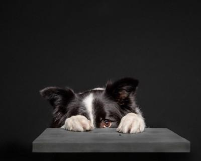 テーブルに隠れて片目だけこちらを見ている犬