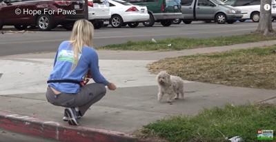 初対面で人の手から食べ物をもらう犬