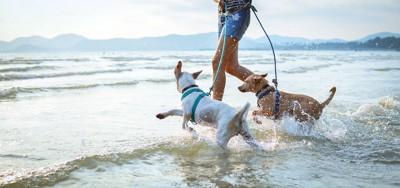 飼い主と海に駆け込むリードをつけた二匹の犬