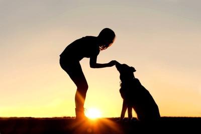 夕日の中の人と犬