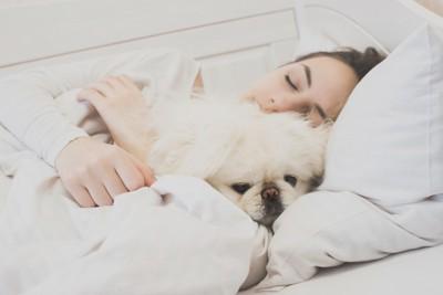 女性と一緒に寝る白い犬