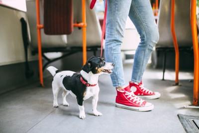 バスに乗る犬と女性
