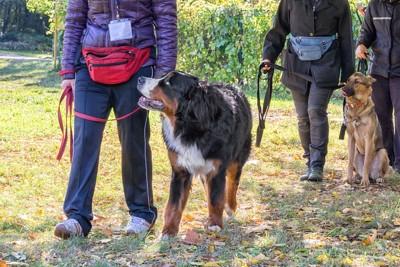 大型犬のウォーキングの様子