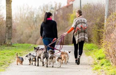 たくさんの犬のお散歩