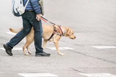 利用者と一緒に道路を歩く盲導犬