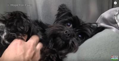 寝転んで人を見上げる犬