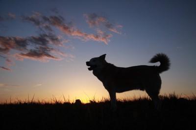 夕焼けと犬