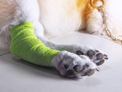 包帯を巻いた犬の足