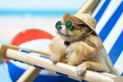麦わら帽子を被っている犬