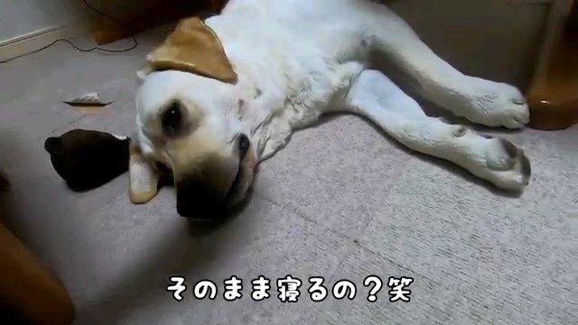 そのまま~字幕