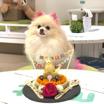 看板犬と犬用ケーキ写真