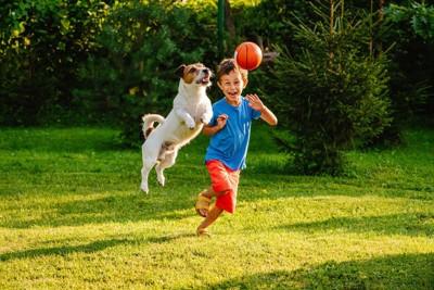 一緒に遊ぶ少年と犬