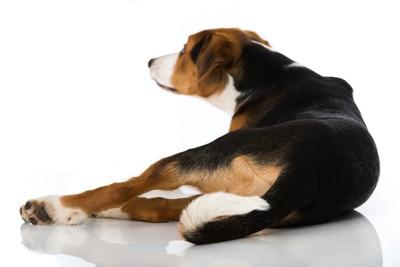 背中を向け座る犬