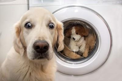 洗濯機に驚く犬