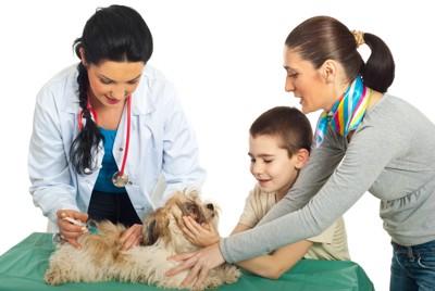 診断中の犬