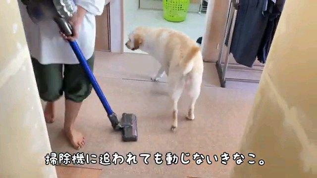掃除機に~字幕
