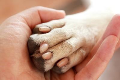 人の手と犬の足