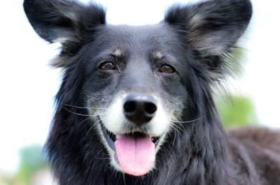 微笑んでいる黒い犬