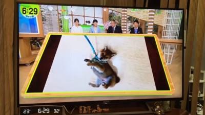 テレビに写る子犬
