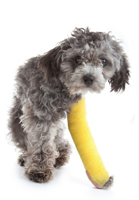 黄色いギプスをした犬