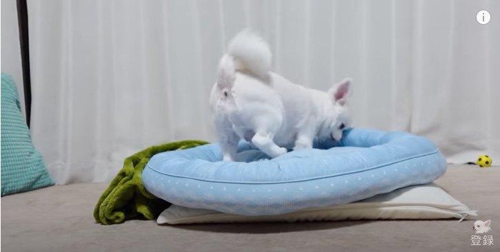 ベッドを整えているとおなら!