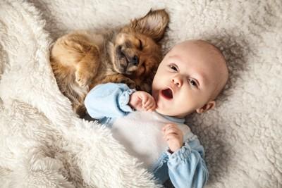 一緒に眠る犬と赤ちゃん