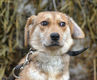 白目が見える表情の犬
