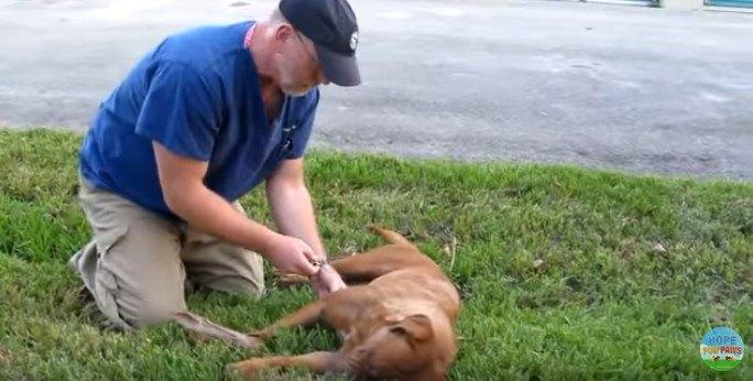 獣医による応急処置