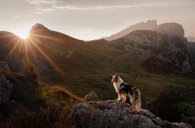 大自然の中に立つ犬