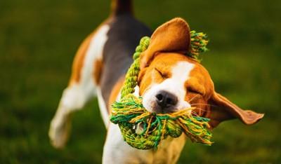 ロープを振り回す犬