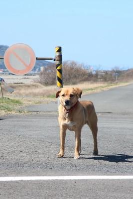 道路標識の前に立つ犬