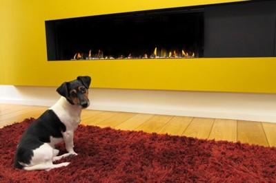 暖炉の前で座る犬