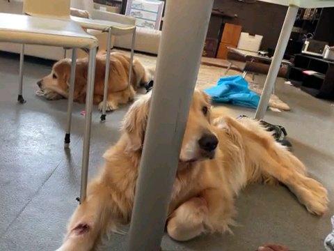 起き上がる犬
