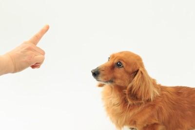 人差し指とミニチュアダックス