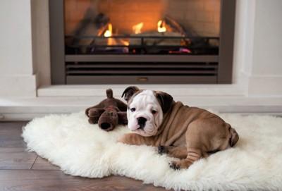 暖炉の前で暖まる犬
