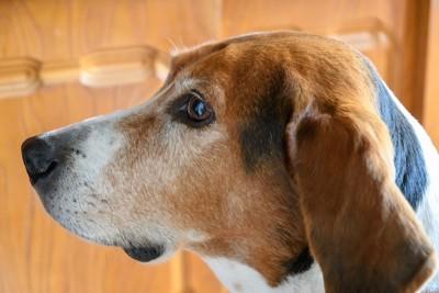 横をじっと見つめる犬