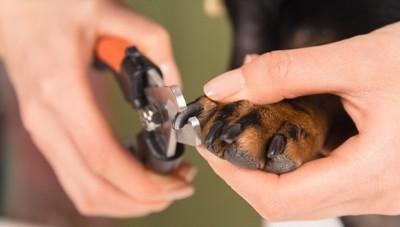 犬の爪切り、黒い爪