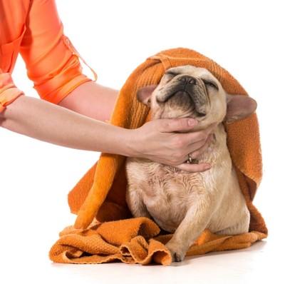 飼い主にタオルで体を拭かれている犬