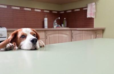 テーブルに足をかける犬