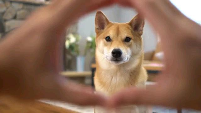 輪を見る犬