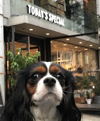 店の看板と犬