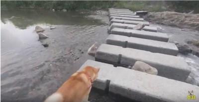 川を渡って