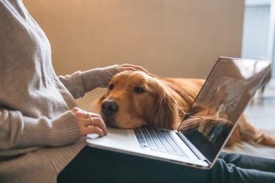 女性の作業するパソコンに顎を乗せる犬