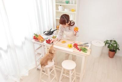 調理中の飼い主と眺めている犬
