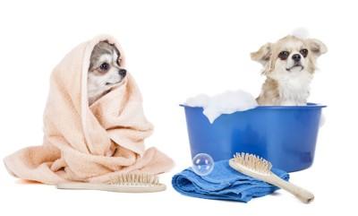 1匹はタオルに包まれていてもう1匹はバケツの中に入っている犬たち