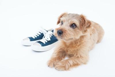 靴の隣に伏せている犬